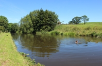 Swimming at Gargrave