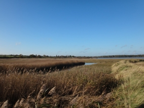 The reed beds