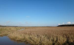 Bulcamp marshes